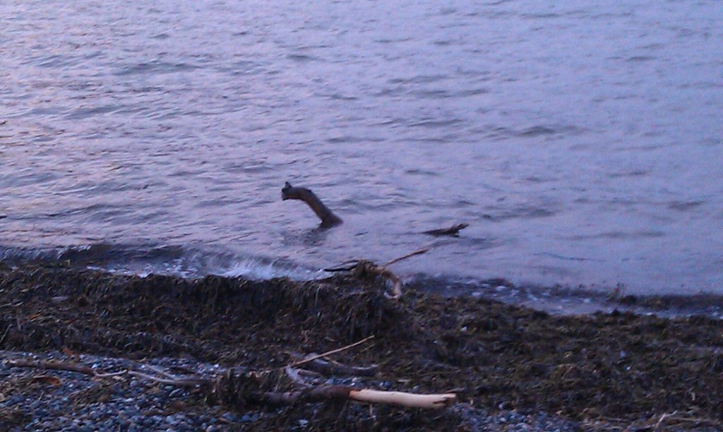 sea monster spotted on crescent beach orcas issues news views