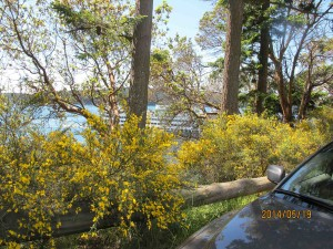 Roadside broom obsructing view of ferry